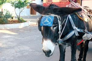 mercedes-brand-donkey
